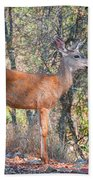 Young Doe Beach Towel