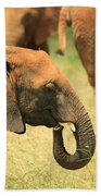 Young Elephant Beach Towel