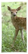 Young Fawn In The Woods Beach Towel
