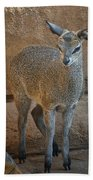 Young Female Klipspringer Beach Towel