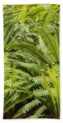 Young Fiddleheads Beach Towel