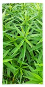 Young Goldenrod Before Blossoms Beach Towel