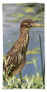 Young Heron Beach Towel