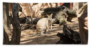 Young Kangaroo Beach Sheet