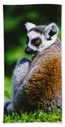 Young Lemur Beach Towel