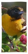 Young Male Oriole Beach Towel