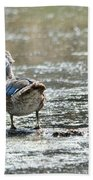 Young Male Wood Duck Beach Towel