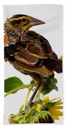 Young Redwing In The Wind Beach Towel