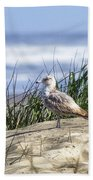 Young Seagull No. 2 Beach Towel