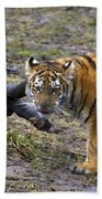 Young Tiger Beach Towel