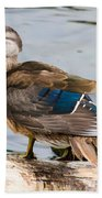 Young Wood Duck Beach Towel