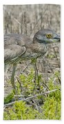 Young Yellow-crowned Night Heron Beach Towel