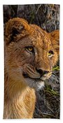 Your Lioness Beach Towel