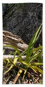 Pedernales Park Texas Yucca By The Dead Tree Beach Towel
