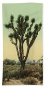Yucca Cactus At Hesperia California Beach Towel