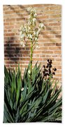 Yucca In The Morning Beach Towel