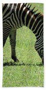 Zebra Eating Grass Beach Towel