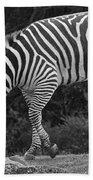 Zebra In Black And White Beach Towel