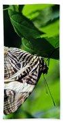 Zebra Long-wing Butterfly  Beach Towel