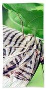 Zebra Long-wing Close-up Beach Towel