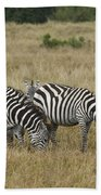 Zebra On Masai Mara Plains Beach Towel