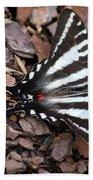 Zebra Swallowtail Butterfly Square Beach Towel