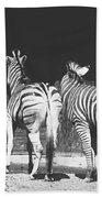 Zebras From Behind Beach Towel