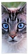 Zing The Cat Looking At Us Beach Towel
