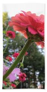 Zinnia Side View Beach Towel