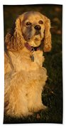 American Cocker Spaniel Beach Towel