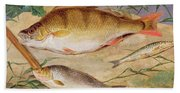 An Angler's Catch Of Coarse Fish Beach Towel