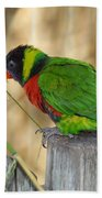 Lorikeet Parrot Sitting On A Fence Post  Beach Towel