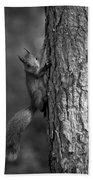 Red Squirrel In Bw Beach Towel