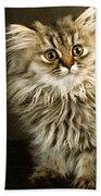Startled Persian Kitten Beach Towel