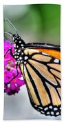 004 Making Things New Via The Butterfly Series Beach Towel