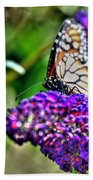 012 Making Things New Via The Butterfly Series Beach Towel
