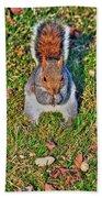 06 Grey Squirrel Sciurus Carolinensis Series Beach Towel