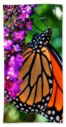 007 Making Things New Via The Butterfly Series Beach Towel