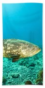 A Goliath Grouper Effortlessly Floats Beach Towel