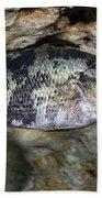 A Shadow Bass Hovers Motionless Beach Sheet