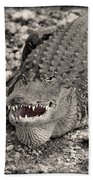 American Alligator Beach Towel