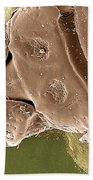 American Dog Tick Beach Towel