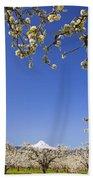 Apple Blossom Trees In Hood River Beach Towel