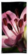Asiatic Lily Named Vermeer Beach Towel