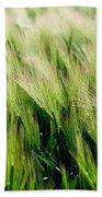 Barley, Co Down Beach Towel