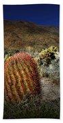 Barrel Cactus Beach Sheet