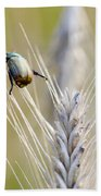 Beetle On The Wheat Beach Towel