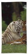 Bengal Tiger Panthera Tigris Tigris Beach Towel by Konrad Wothe
