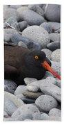 Black Oystercatcher Haematopus Bachmani Beach Towel