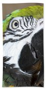 Blue And Gold Macaw Beach Towel